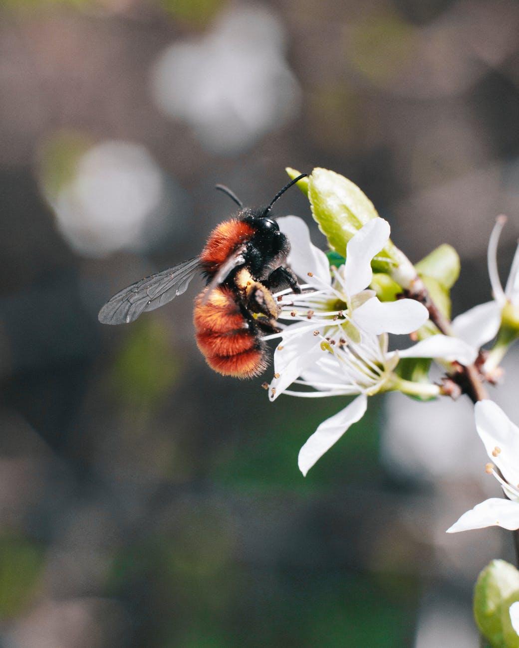macro photography of bee on flower